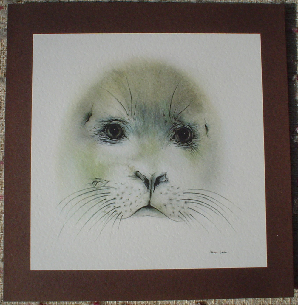 """Seal Pup Face"" by Klaus Meyer Gasters, shown with full margin - vintage offset lithograph reproduction watercolour collectible art print from 1981 (size 12 x 11.5 inches/30.5 x 29.25 cm) - KerrisdaleGallery.com"