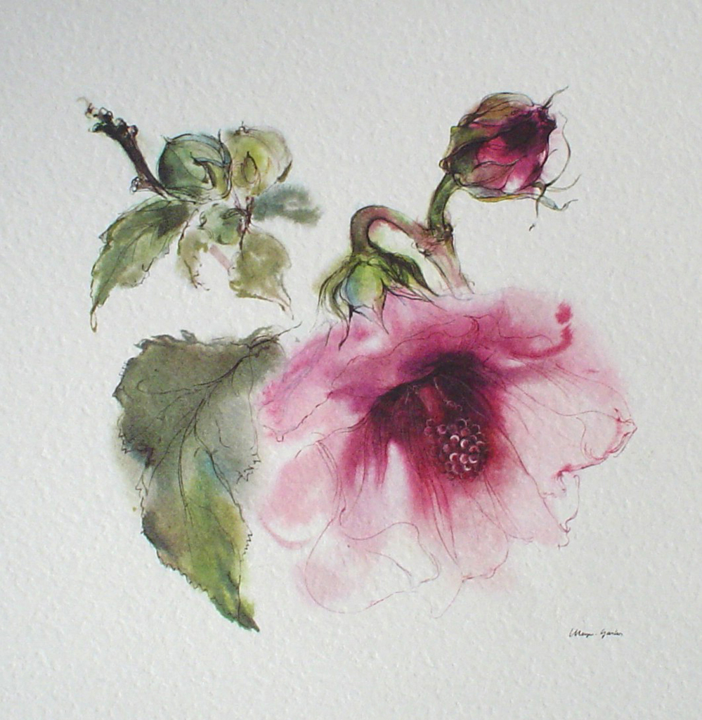 """Red Hibiscus Flower With Bud"" by Klaus Meyer Gasters - vintage offset lithograph reproduction watercolour collectible art print from 1981 (size 12 x 11.5 inches/30.5 x 29.25 cm) - KerrisdaleGallery.com"