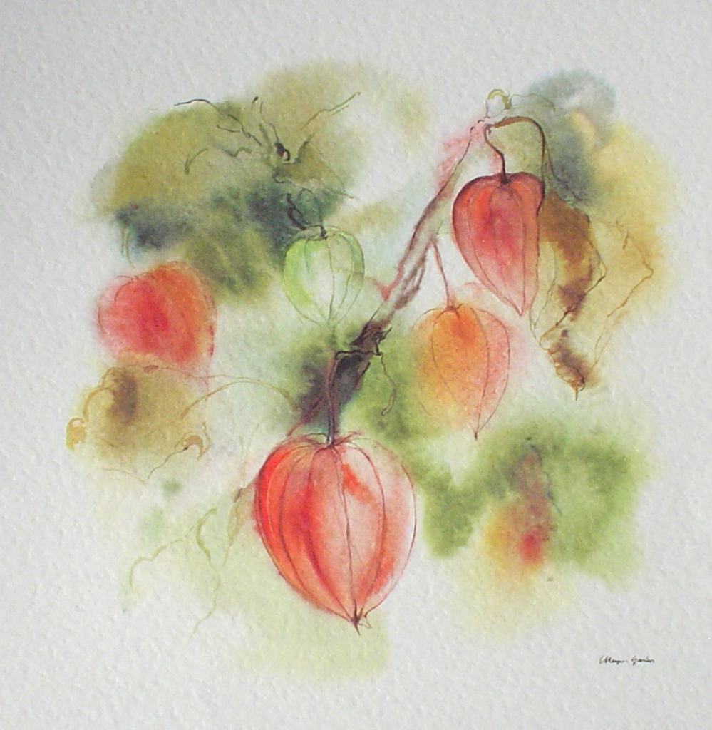 """Red Lantern Flowers"" by Klaus Meyer Gasters - vintage offset lithograph reproduction watercolour collectible art print from 1981 (size 12 x 11.5 inches/30.5 x 29.25 cm) - KerrisdaleGallery.com"
