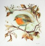 """Red Robin"" in German:""Rotkehlchen"" by Klaus Meyer Gasters - vintage offset lithograph reproduction watercolour collectible art print from 1981 (size 12 x 11.5 inches/30.5 x 29.25 cm) - KerrisdaleGallery.com"