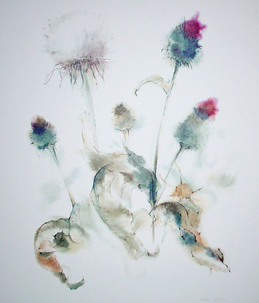 """""""White Thistle"""" by Klaus Meyer Gasters - vintage 1970's/1980's offset lithograph reproduction watercolour collectible fine art print (size approx. 15 x 18.5 inches/ ca 38 x 47 cm) - KerrisdaleGallery.com"""