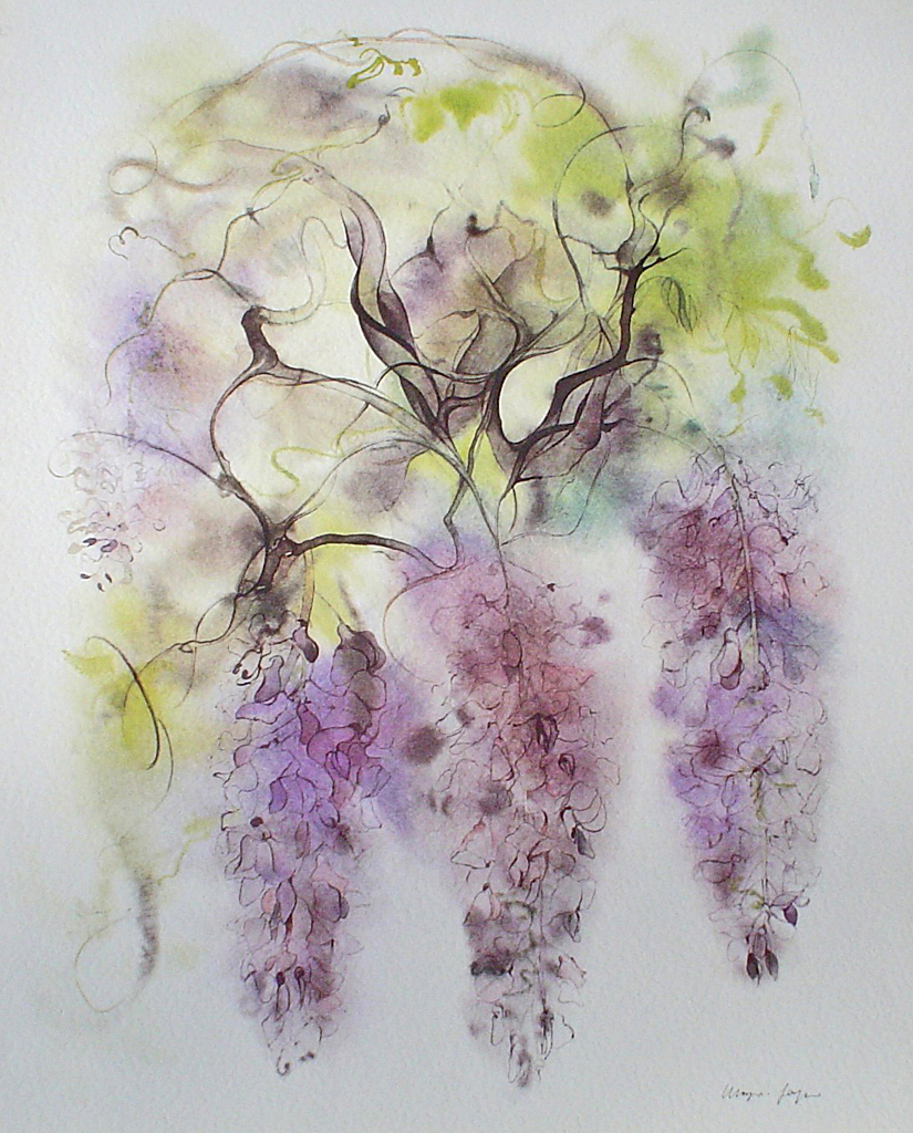 """Purple Wisteria"", in German: ""Glyzinien"" by Klaus Meyer Gasters - vintage 1970's/1980's offset lithograph reproduction watercolour collectible fine art print (size approx. 15 x 18.5 inches/ ca 38 x 47 cm) - KerrisdaleGallery.com"