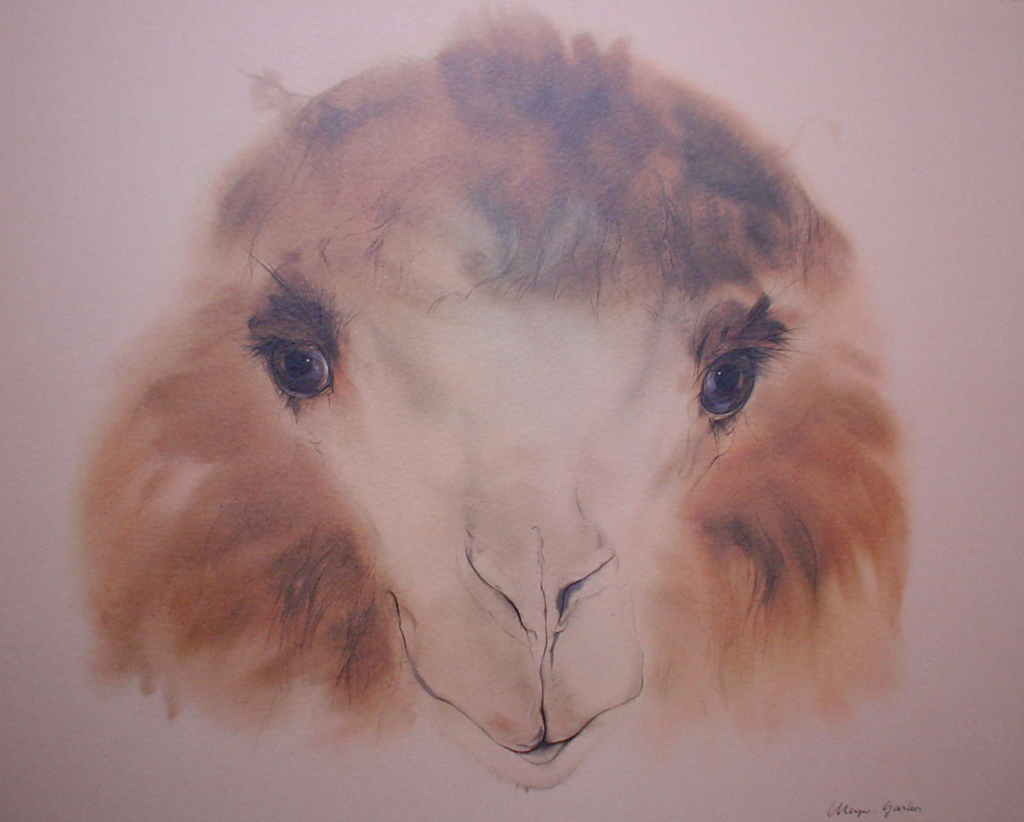 """Pleasant Camel"" by Klaus Meyer Gasters - vintage 1970's/1980's offset lithograph reproduction watercolour collectible fine art print (size approx. 15 x 18.5 inches/ ca 38 x 47 cm) - KerrisdaleGallery.com"