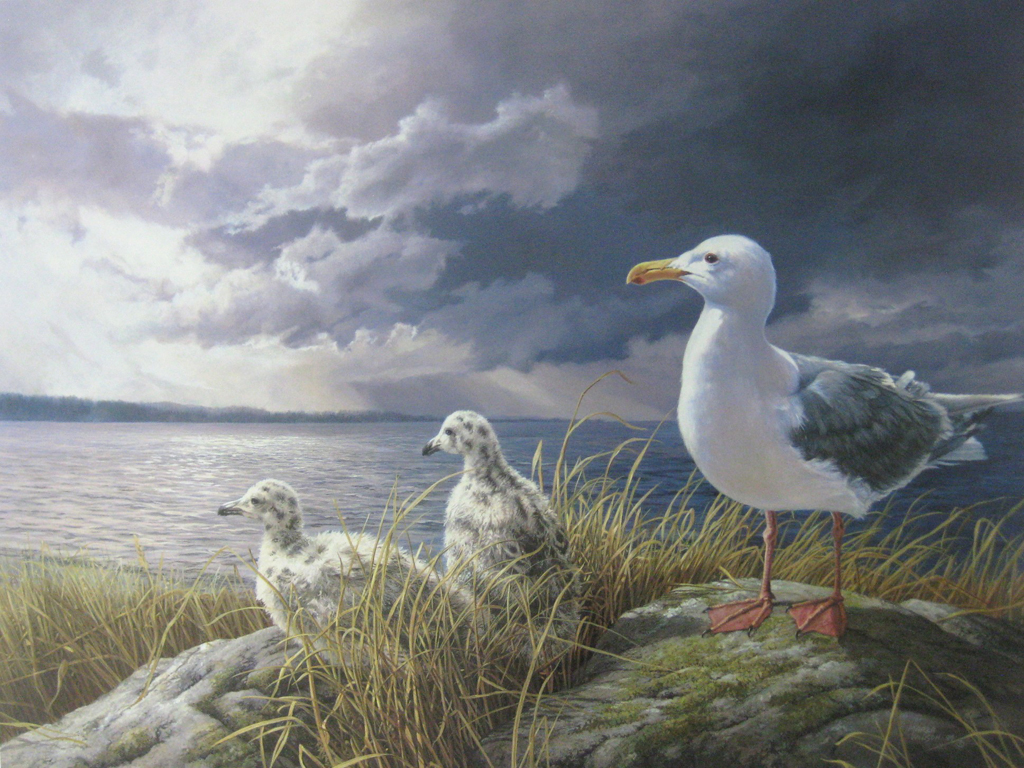KerrisdaleGallery.com - stock ID#WM429ph-snt - Glaucous-winged Gull by Marla Wilson - Limited Edition 429/695, 1989 offset lithograph; numbered, titled and signed in pencil by the artist