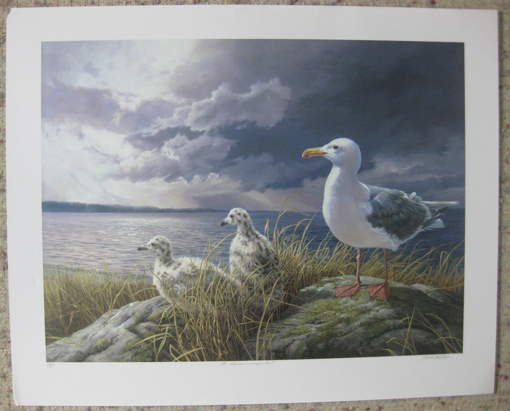 KerrisdaleGallery.com - stock ID#WM429ph-snt - Glaucous-winged Gull by Marla Wilson, shown with full margins - Limited Edition 429/695, 1989 offset lithograph; numbered, titled and signed in pencil by the artist