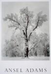 Oak Tree Snowstorm Yosemite by Ansel Adams - offset lithograph fine art poster print