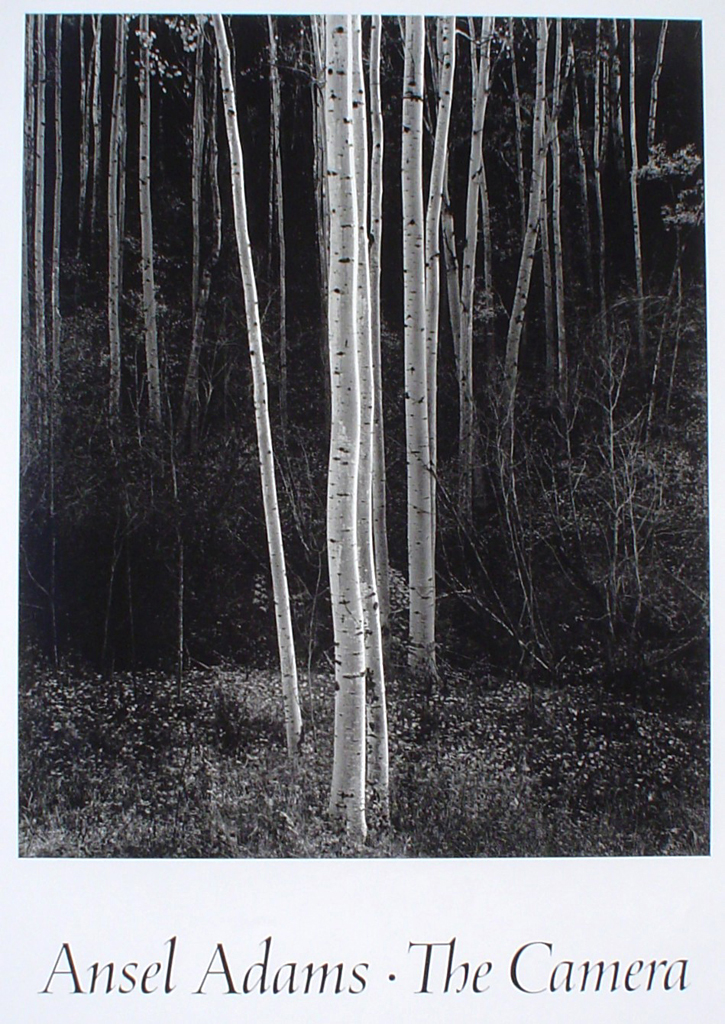 Aspens Northern New Mexico by Ansel Adams - offset lithograph fine art photographic poster print