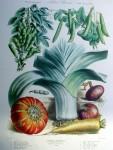 Botanical No.34,1883 Botanical No.34,1883 Squash Leek Peas Onion Carrot by Vilmorin Seed Co - offset lithograph fine art print