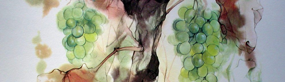 """""""Green Grapes"""", in German: """"Weintrauben"""" by Klaus Meyer Gasters, shown with full margins - vintage 1970's/1980's offset lithograph reproduction watercolour collectible fine art print (size approx. 15 x 18.5 inches/ ca. 38 x 47 cm) - KerrisdaleGallery.com"""