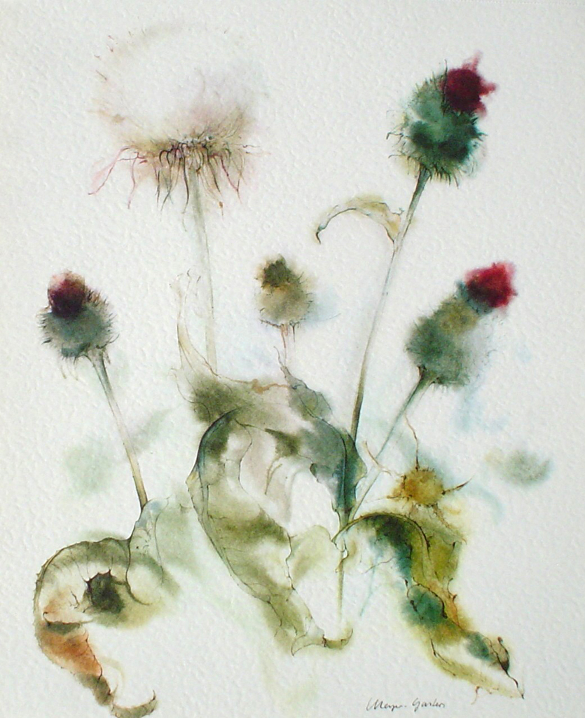 """""""White Thistle"""" by Klaus Meyer Gasters - vintage 1977 offset lithograph reproduction watercolour collectible fine art print (size 12.5 x 10.75 inches/31.75 x 27 cm) - KerrisdaleGallery.com"""