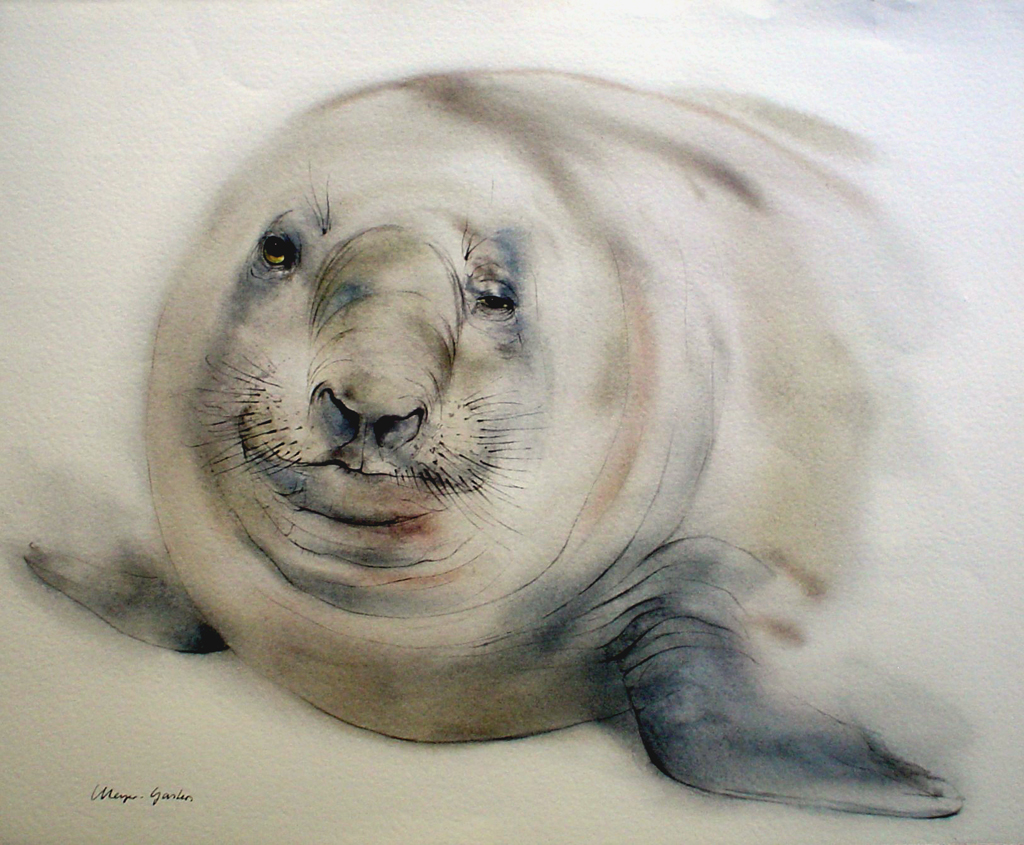 """""""Elephant Seal"""", in German: """"Seeelefant"""" by Klaus Meyer Gasters - vintage 1970's/1980's offset lithograph reproduction watercolour collectible fine art print (size approx. 15 x 18.5 inches/ ca 38 x 47 cm) - KerrisdaleGallery.com"""