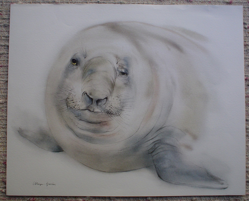 """""""Elephant Seal"""", in German: """"Seeelefant"""" by Klaus Meyer Gasters, shown with full margins - vintage 1970's/1980's offset lithograph reproduction watercolour collectible fine art print (size approx. 15 x 18.5 inches/ ca 38 x 47 cm) - KerrisdaleGallery.com"""
